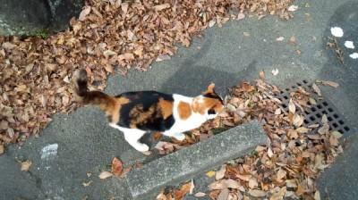 木の葉と、三毛猫