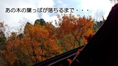 あの木の葉が落ちるまで・・・