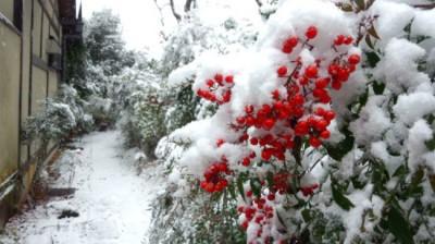雪と、南天