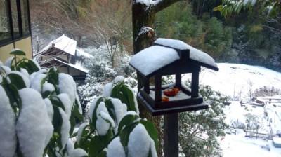 雪と、鳥餌