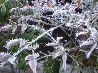 黒川温泉旅館壱の井露天風呂の霧氷