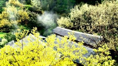 フロントからの景色新緑シーズン