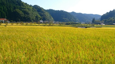 南小国町の田園風景